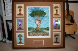 emek peace tree usfice6