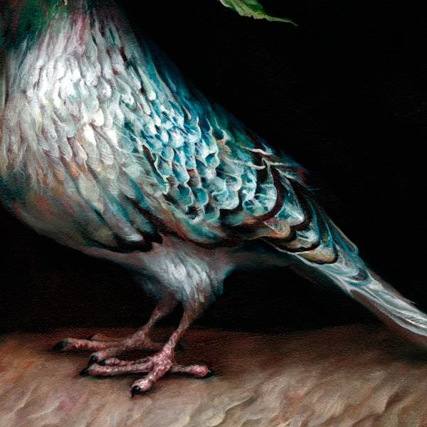 andrews Hope Pigeon.jpg 1