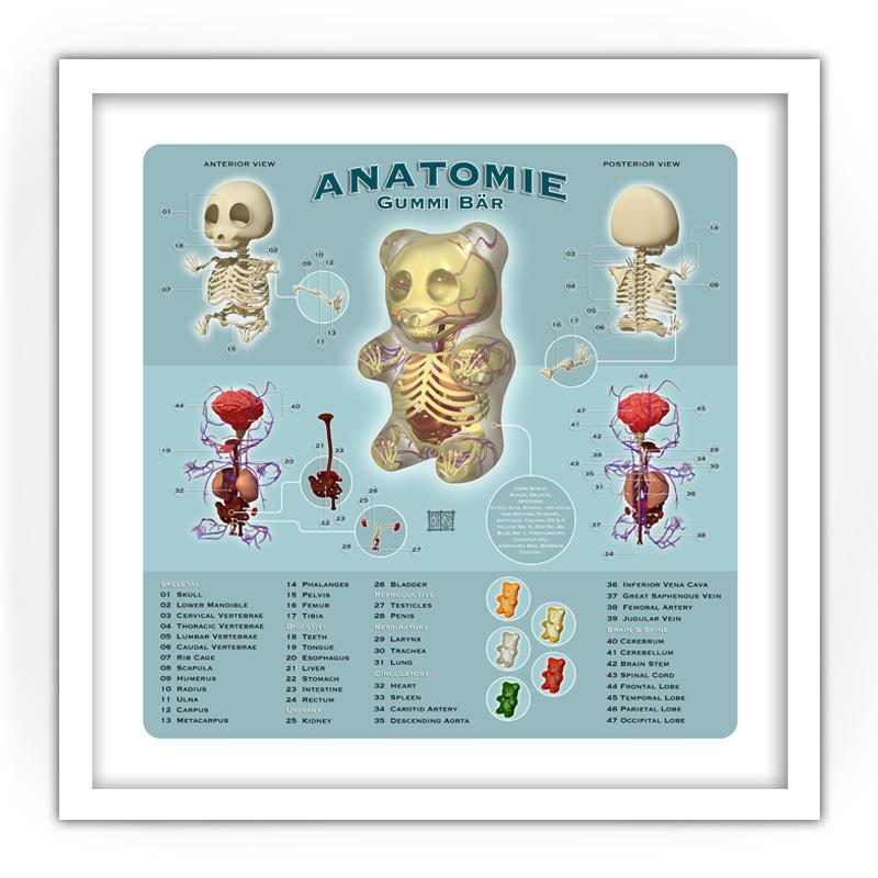 Freeny Anatomie