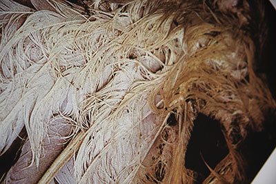 lafond untitled feathers 1