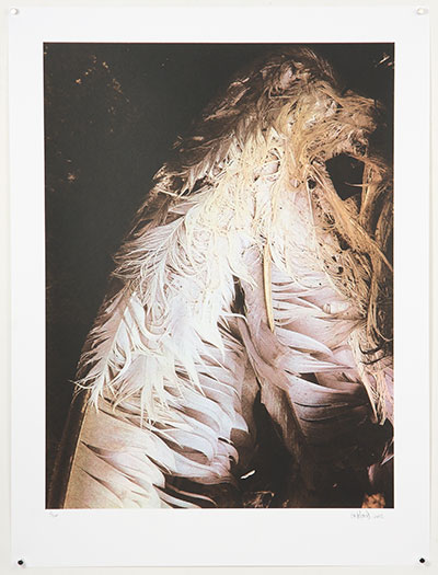 lafond untitled feathers