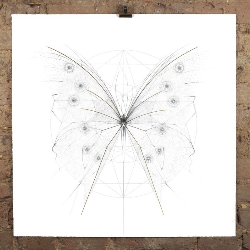 albarn morpho butterfly