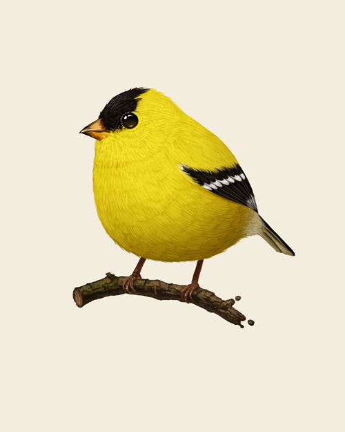 mitchell American Goldfinch