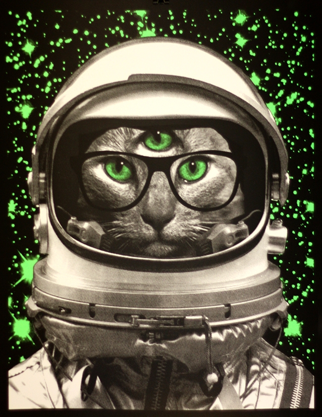 duval space kitty