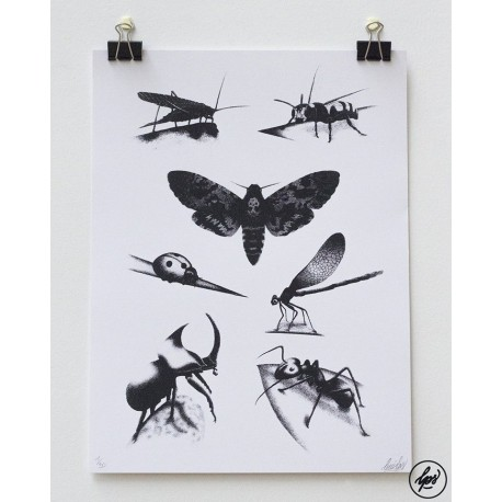 louis lps insect plate
