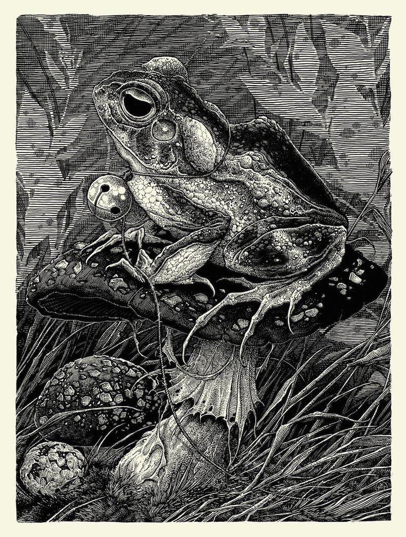 holt gypsy toad